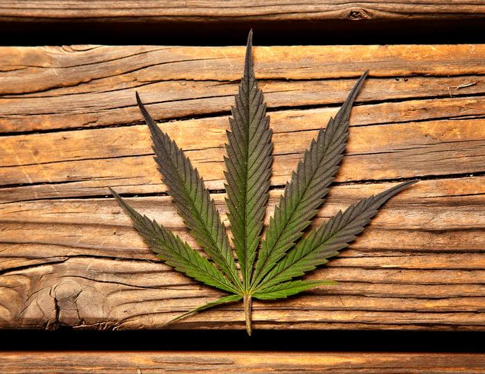 A marijuana leaf on a wooden table.