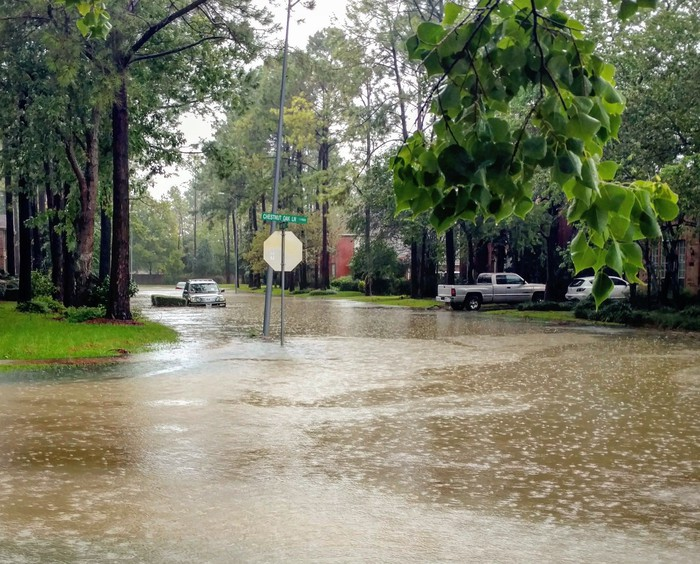 Flooded street with cars and trees.
