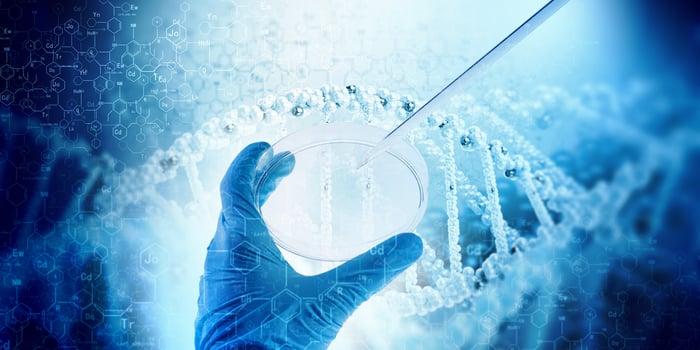 Scientist pipetting DNA into a petri dish.