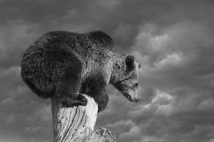 A bear on a tree stump.