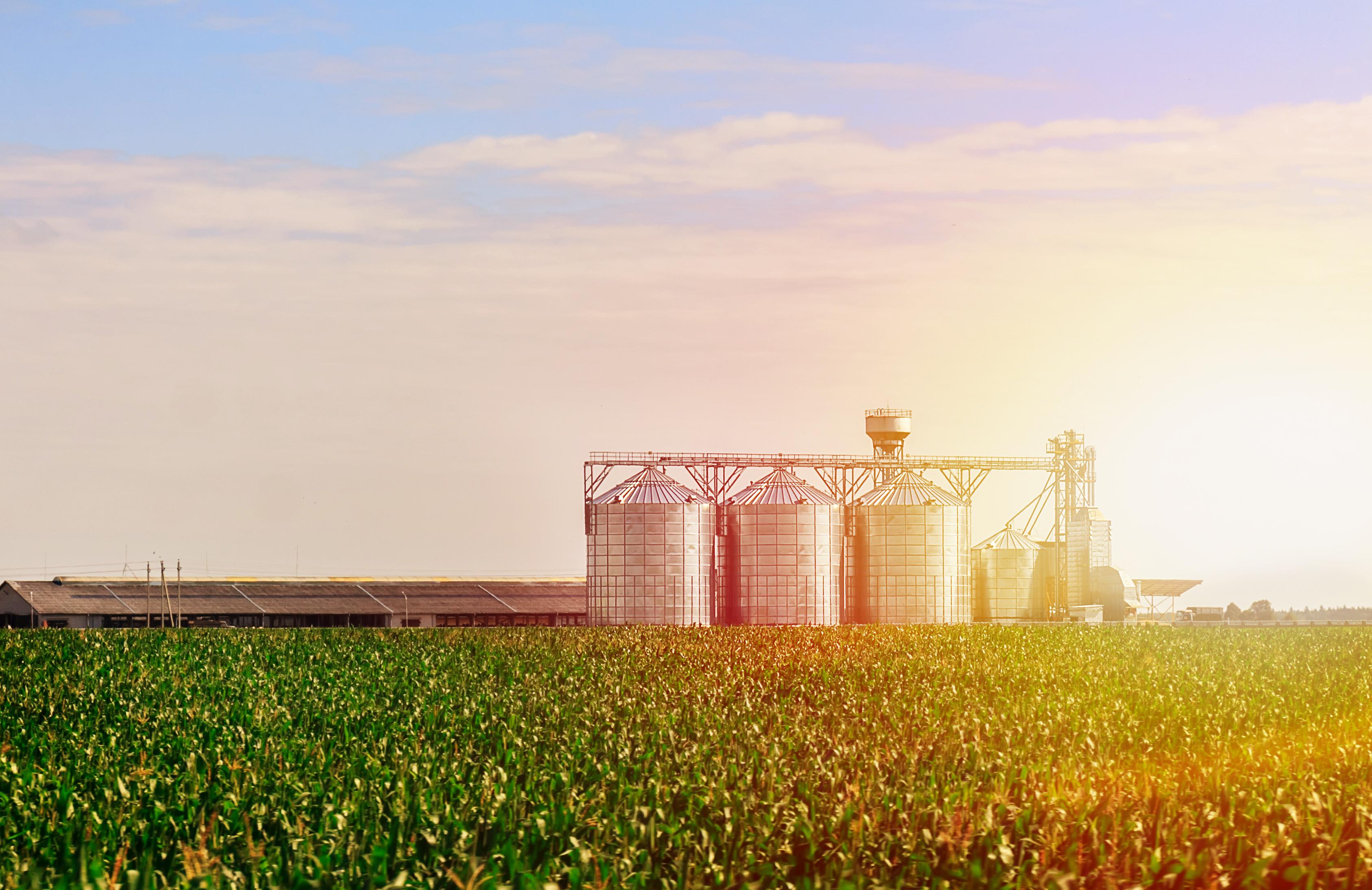 Grain silos in rural environment