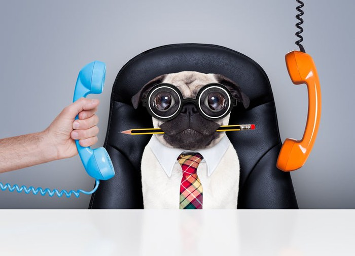 Dog in leather office chair with bowtie and goggle glasses and pencil in mouth, with phone receivers hanging by cords on either side.