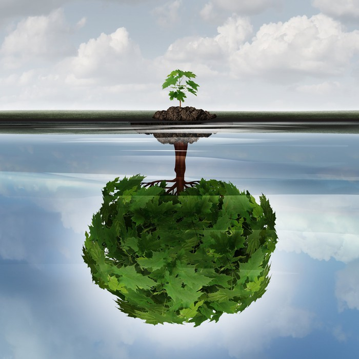 A small young sapling making a reflection of a mature large tree in the water