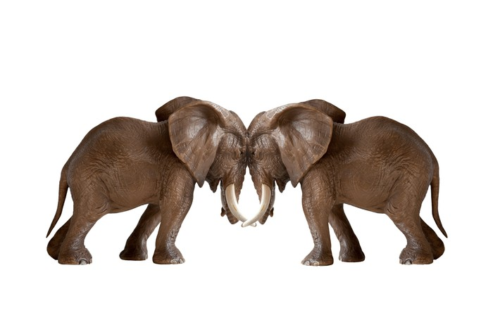 Two elephants facing each other