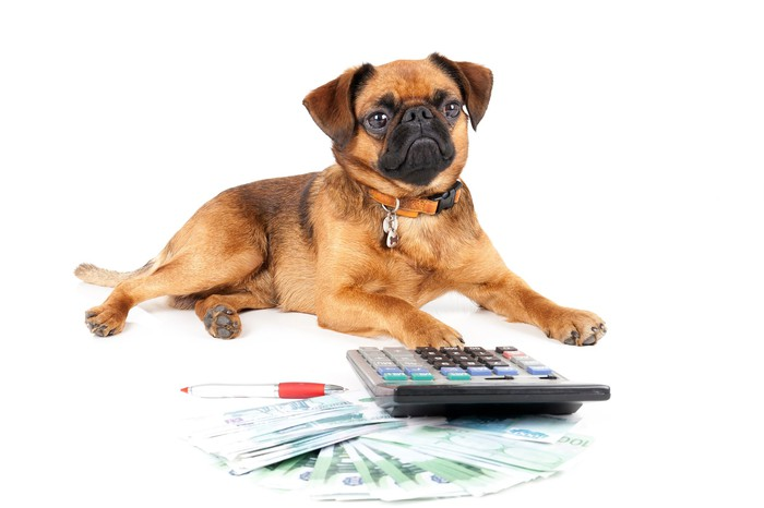 Dog with paw on a calculator in front of a fanned-out wad of foreign cash and a pen.