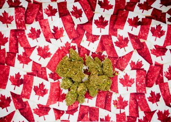 Marijuana buds on Canadian maple leaf papers