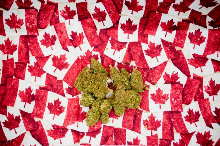 Marijuana buds on tiny Canadian maple leaf flags