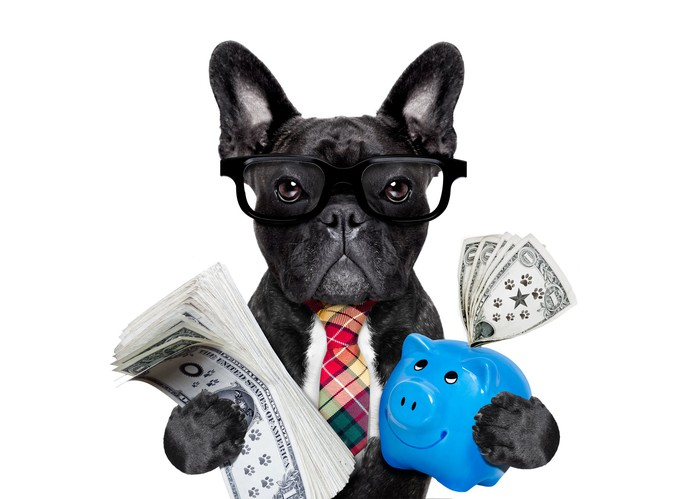 A black dog wearing glasses and a tie holding a stack of paper currency in one paw and a piggy bank in the other paw.
