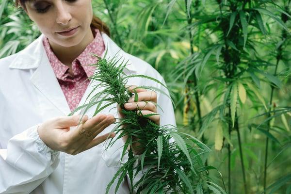 woman scientist hemp marijuana getty