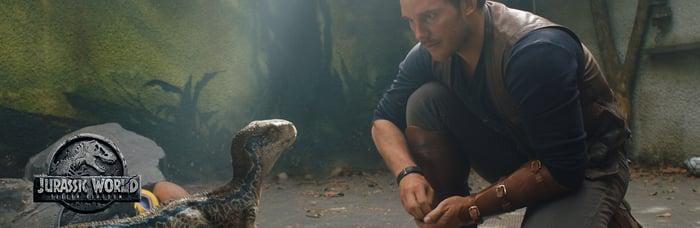 Actor Chris Pratt crouches besides a baby velociraptor dinosaur.