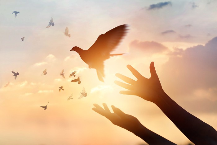 A pair of hands and a flock of birds in silhouette against a sky.