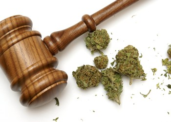 Marijuana buds with gavel