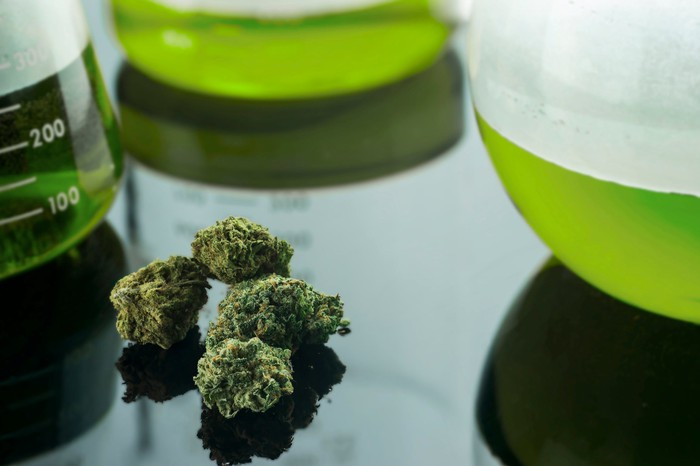 Marijuana buds on table next to beakers containing green liquid