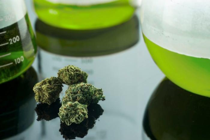 Marijuana buds on table next to beakers containing green liquid