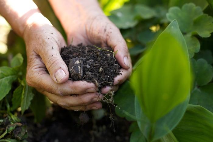 A woman holding fertilizer in hand in an crop field.