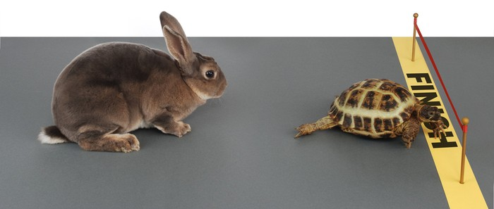 A tortoise wins a race against a hare.