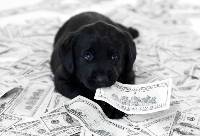 a black labrador pully holds a hundred-dollar bill in its mouth on top of a pile of cash.