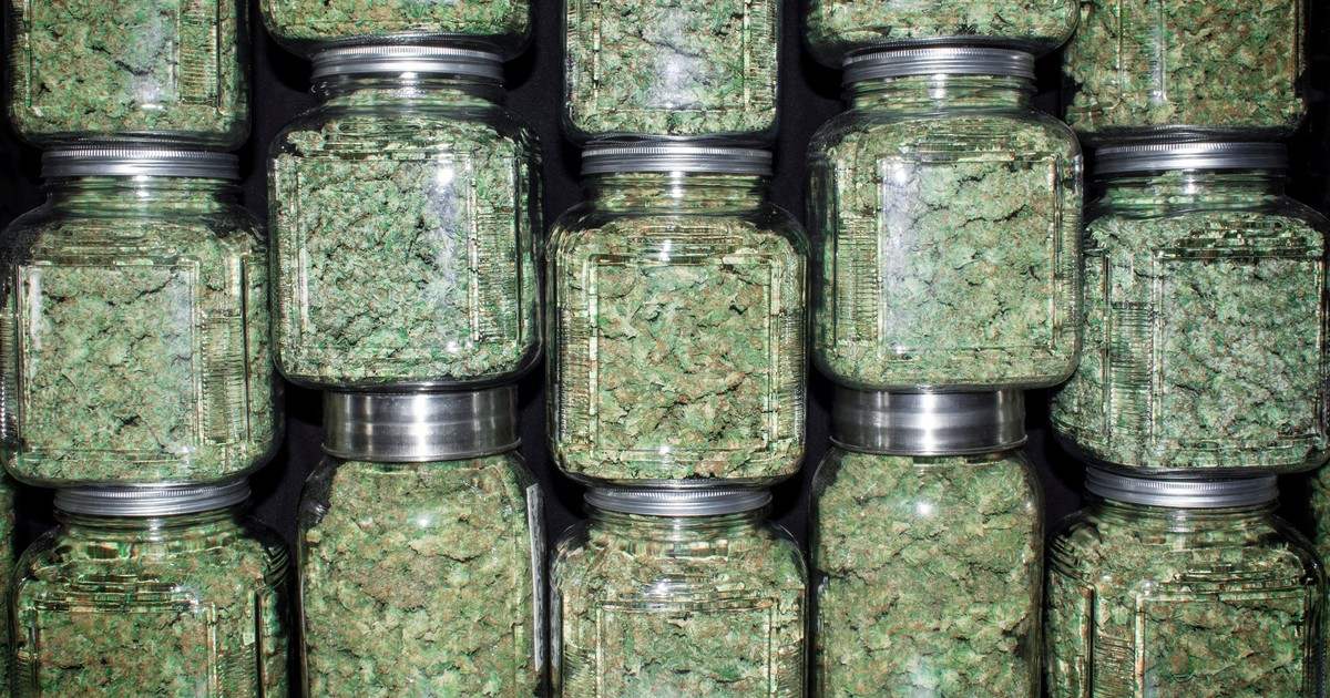 4 Marijuana Stocks That Should Yield at Least 100,000 Kilograms of Cannabis Annually by 2019