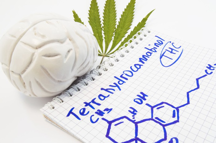 THC chemical structure drawn on notepad next to plastic model of human brain and a marijuana leaf