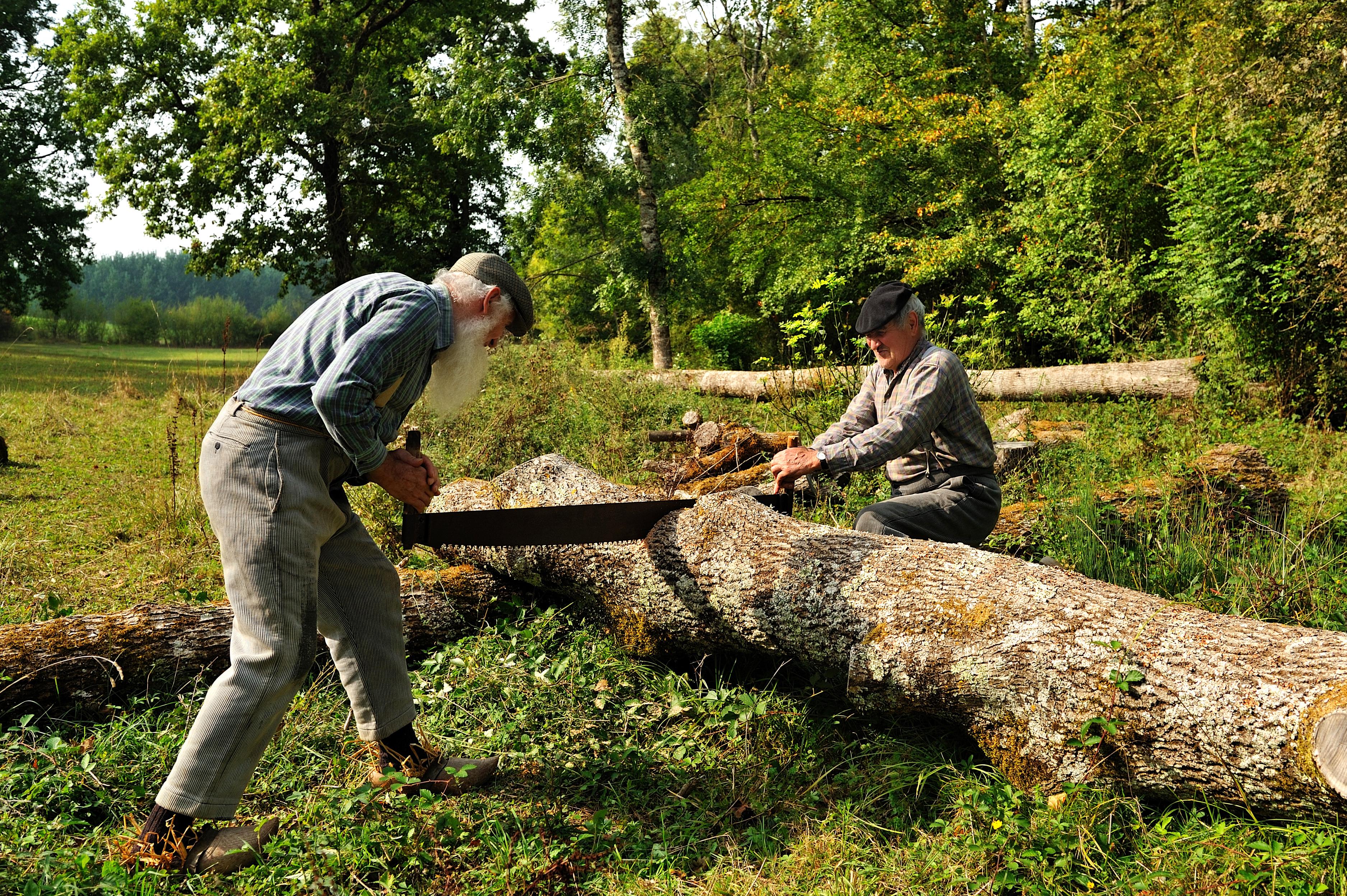 Two men sawing wood
