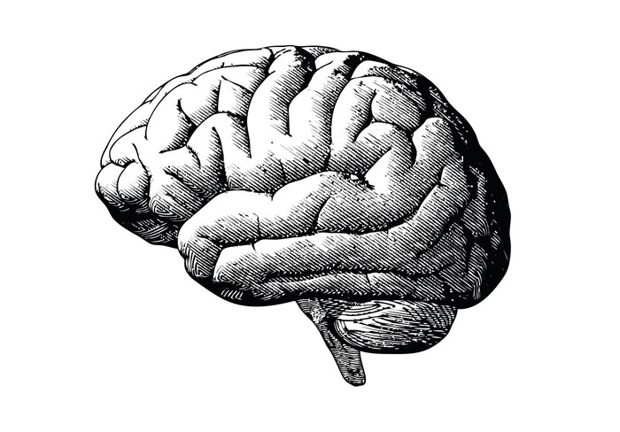 Engraving of a brain