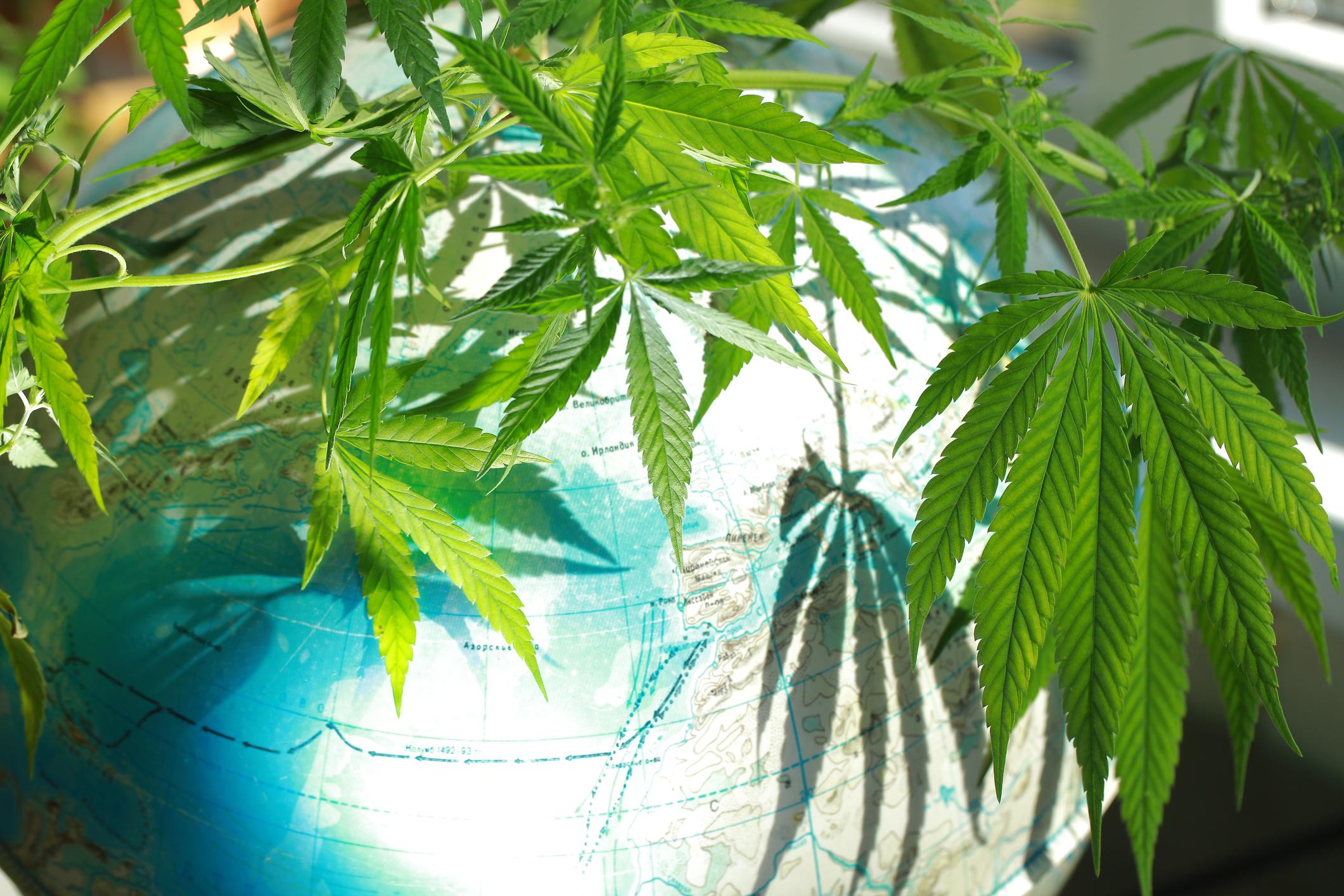 Marijuana covering part of a globe