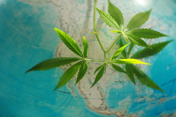 Marijuana with globe in background