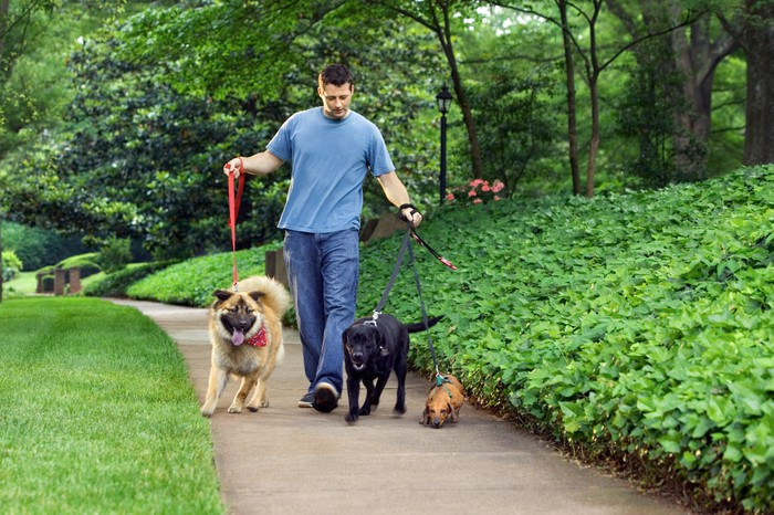 Man walking three dogs in a park.