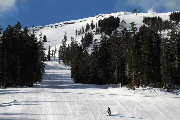 Lone skier on a slope dotted with trees under a blue sky.