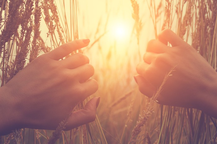 two hands parting wheat in a field
