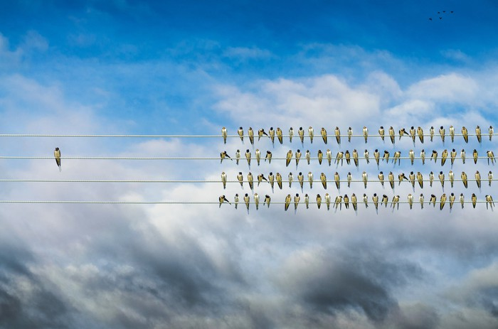 birds on a wire alone against mass