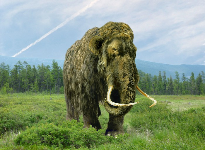Woolly mammoth walking through a field with line of trees behind it