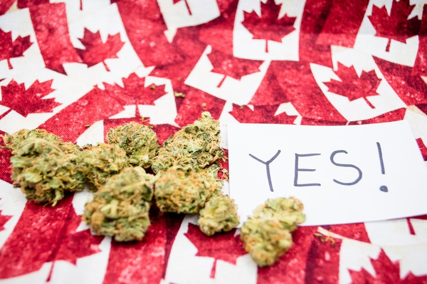 Marijuana Cannabis Weed Pot Canada Legalize Buds Getty