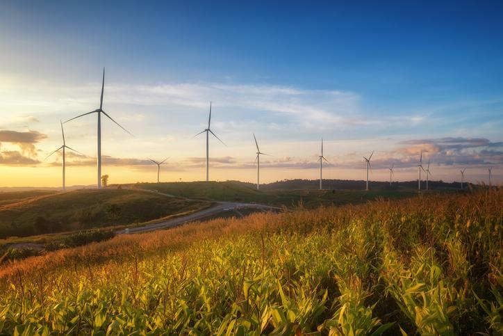 Wind turbines spread across a field.