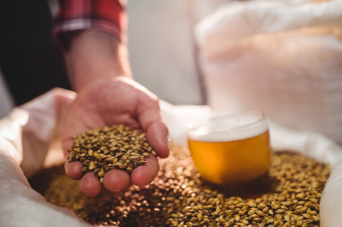 A hand holding barley next to a glass of beer sitting on top of a bag of barley.