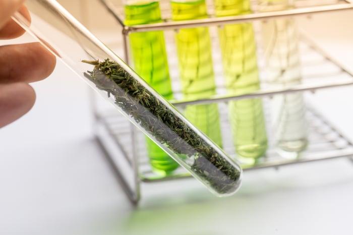 Marijuana plant matter in a test tube.
