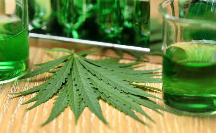 Marijuana leaf next to beakers containing green fluid