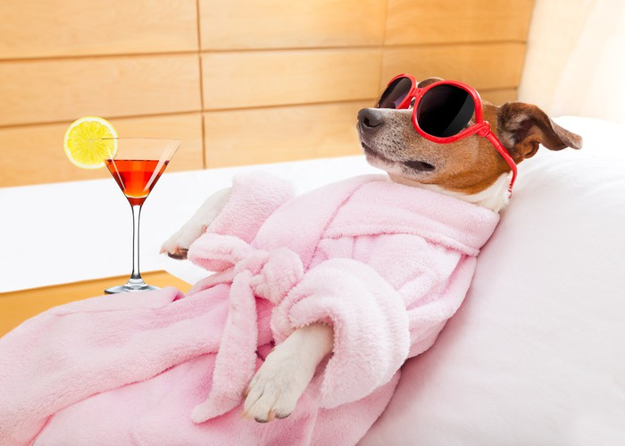 A dog relaxing in a bathrobe and sunglasses, next to a martini