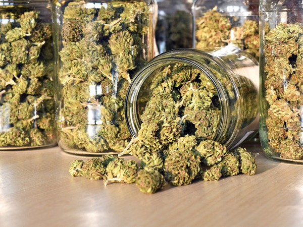 Cannabis Jars Marijuana Pot Weed Canada Legal Getty