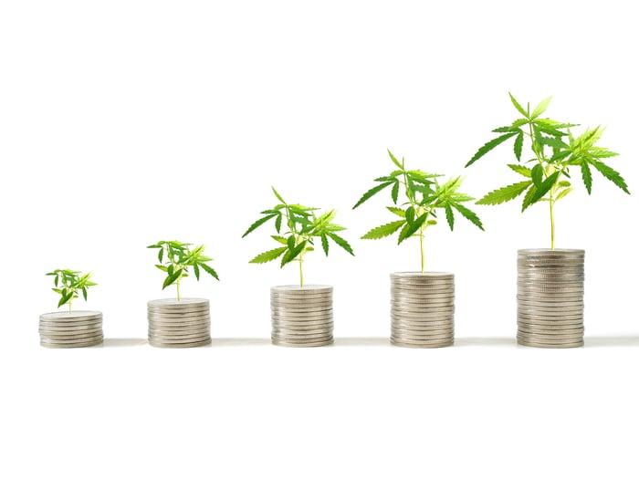 Better Marijuana Stock Canopy Growth Corporation Vs Tilray Inc