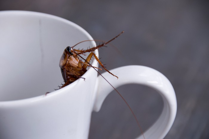 A cockroach in a cup