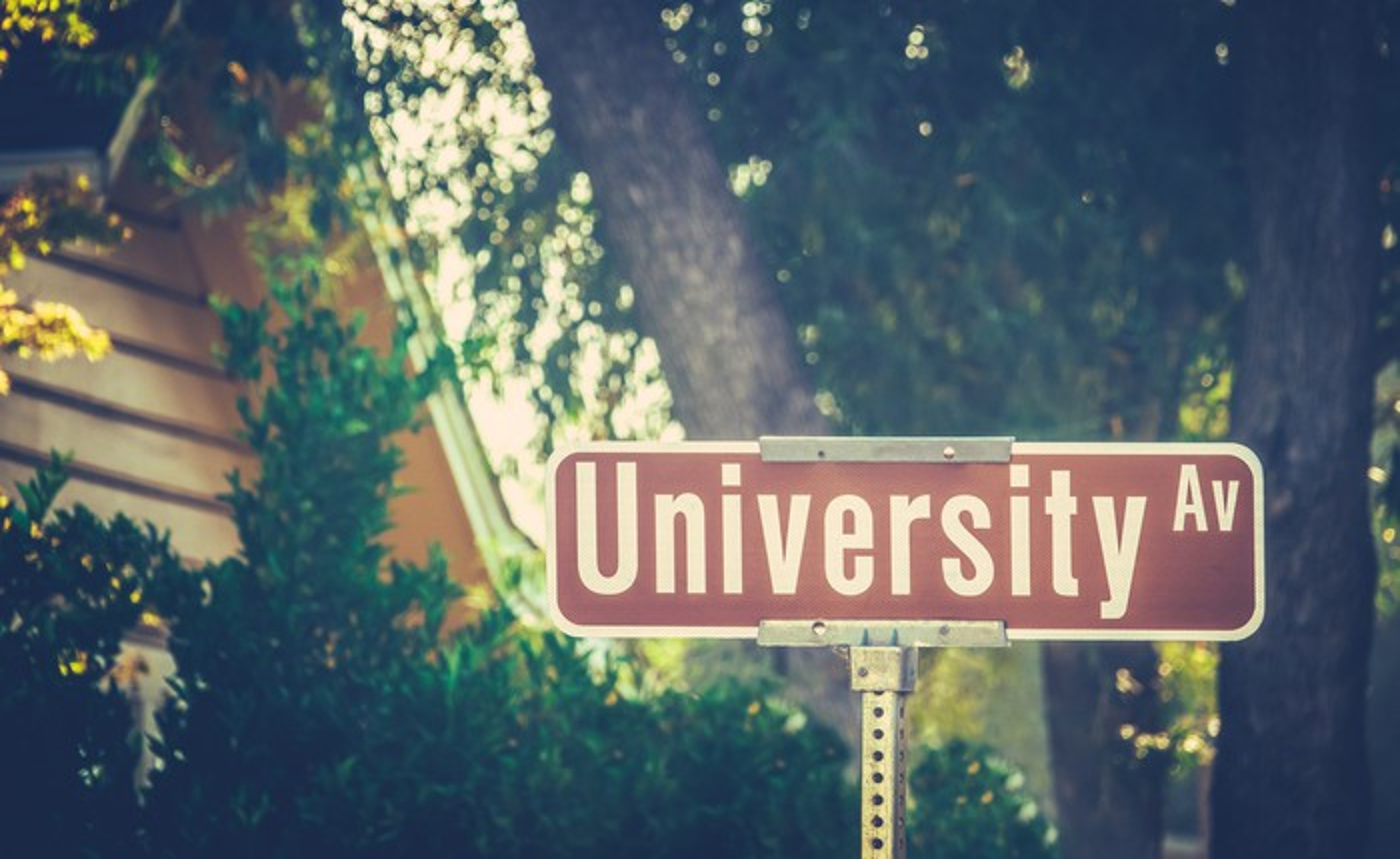 "Street sign on leafy college street which reads ""University Av."""
