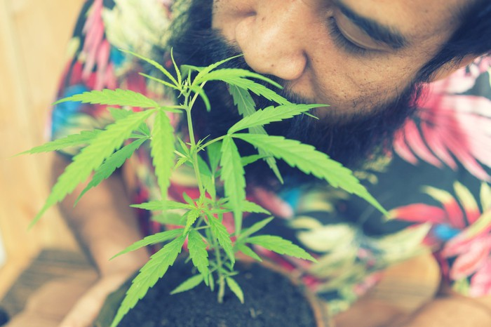 A man smelling the leaves of a potted cannabis plant that he's holding.