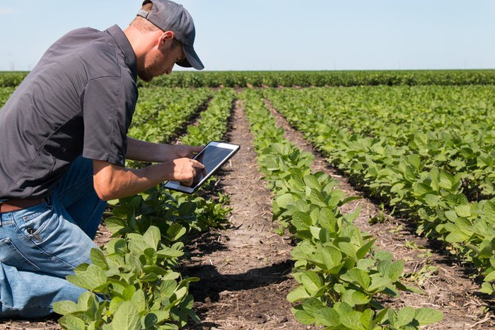 An agronomist using a tablet in the field.