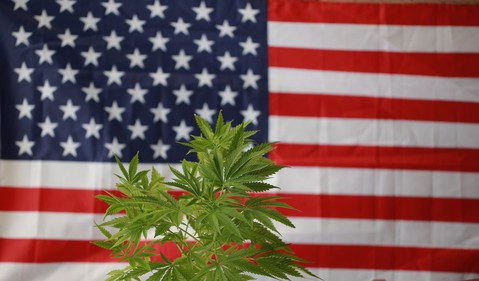 Marijuana in front of U.S. flag