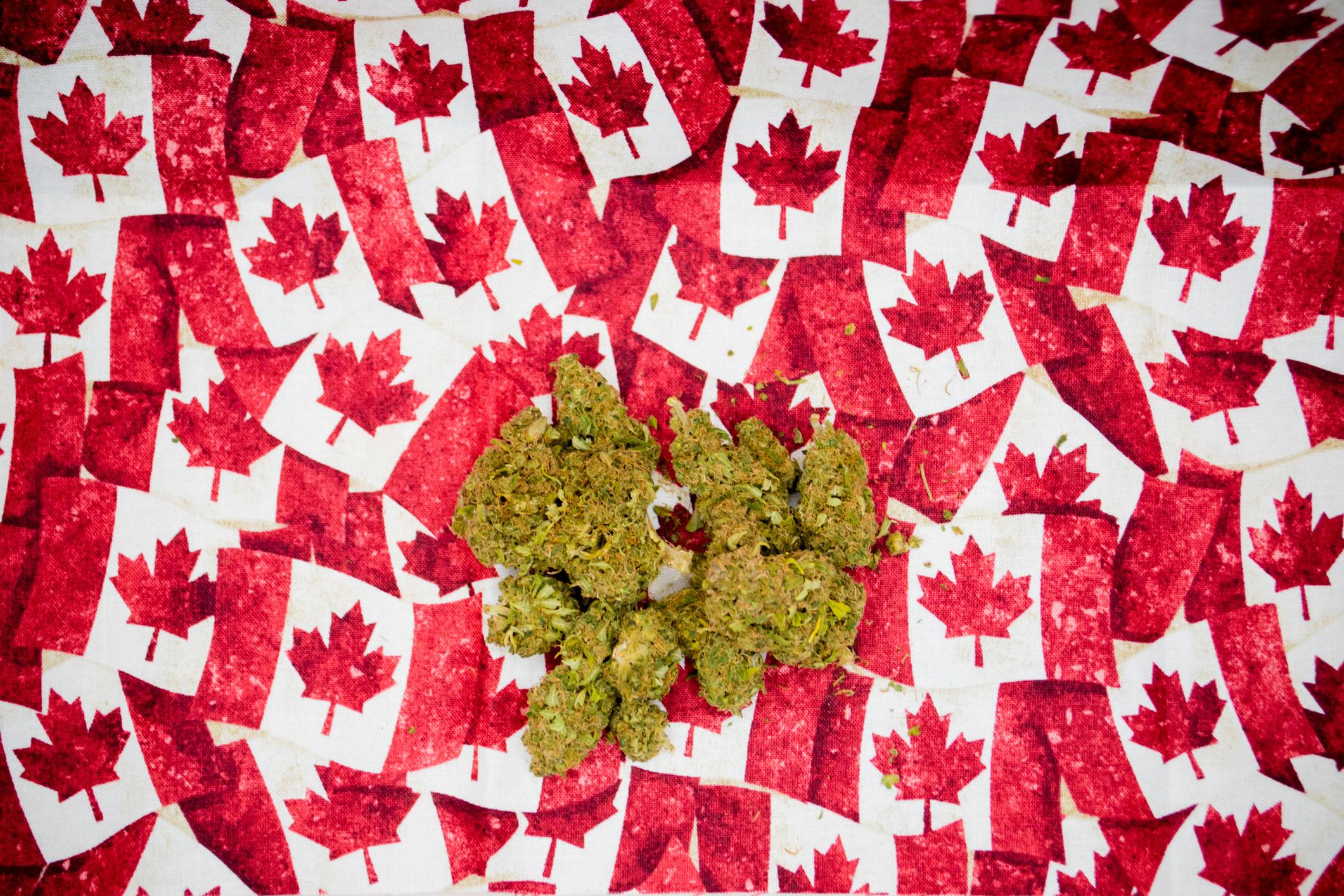 Marijuana buds on top of tiny Canadian flags.