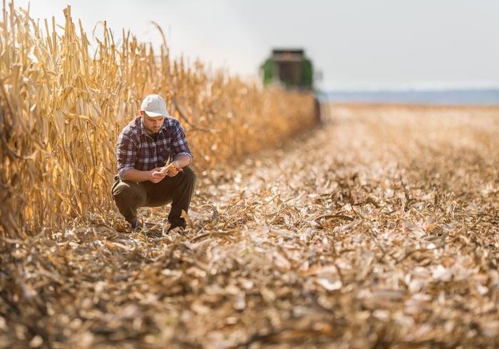 A farmer in a corn field.