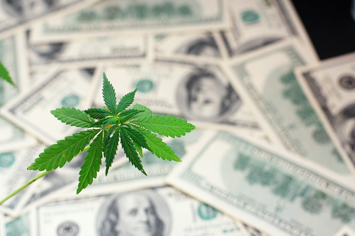 A marijuana leaf in front of a pile of $100 bills.