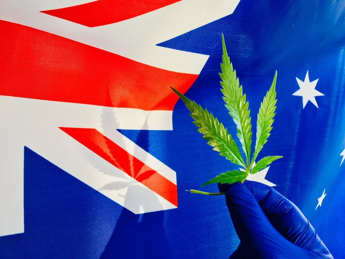 A person holding a marijuana leaf in front of an Australian flag.