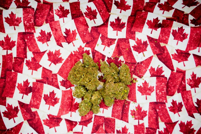 Marijuana buds on top of small Canadian flags.